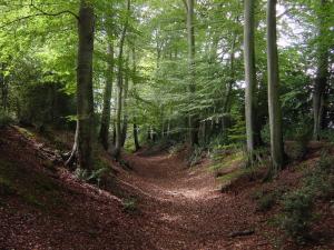 Chiltern Ridgeway